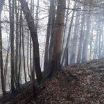 Flurbrand Edenlehen 5