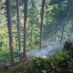 Waldbrand 2