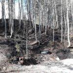 Flurbrand Edenlehen 11