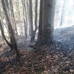 Flurbrand Edenlehen 4