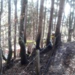 Flurbrand Edenlehen 10